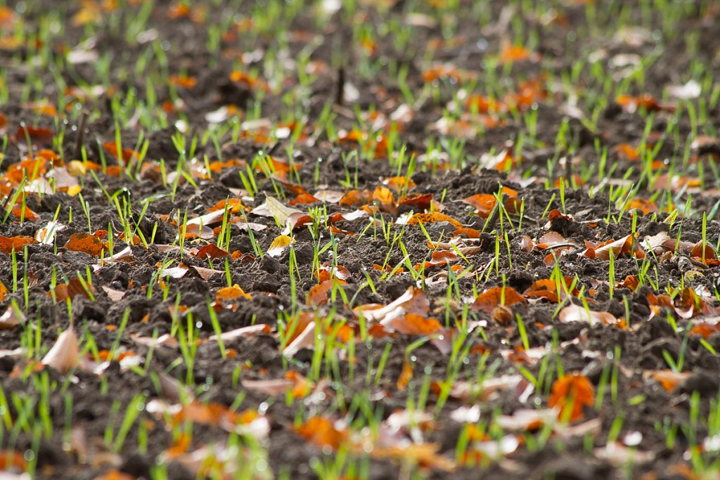Herbst-20131013-6914.jpg