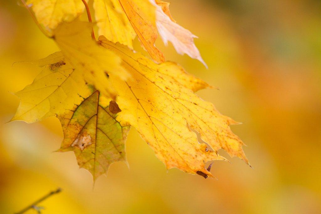 Herbst-20131013-6895.jpg