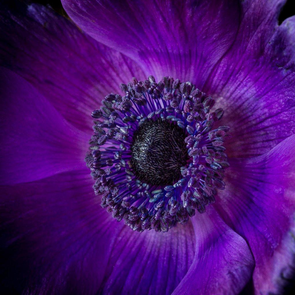 Blumen-20150131-0593.jpg
