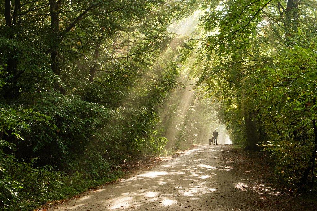 Wald-7438.jpg