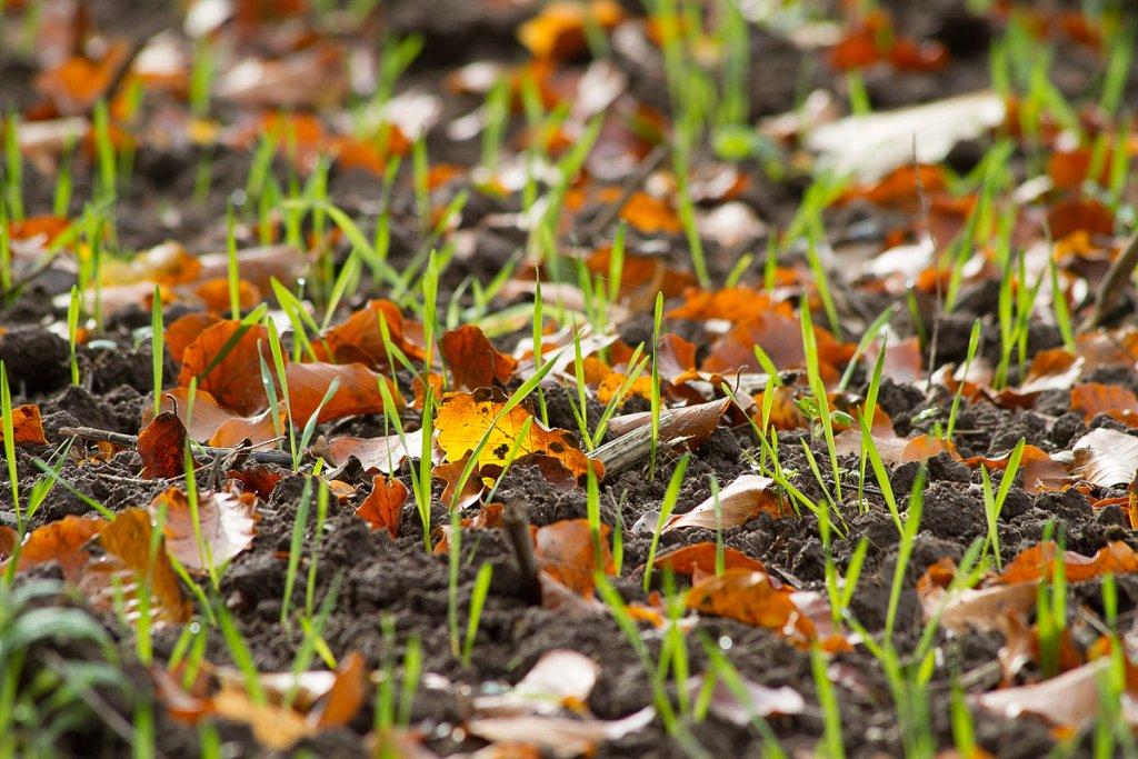 Herbst-20131013-6921.jpg